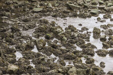 Water draining from side channel on Acushnet River in New Bedford Massachusetts, exposing rocks and thick seaweed