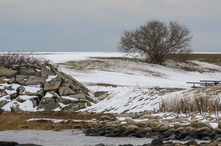 Late autumn snow and leafless tree on east side shoreline at Fort Taber Park in New Bedford
