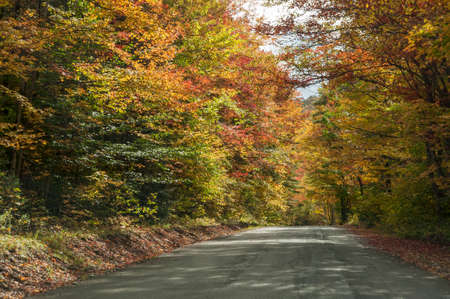 Country road curving right on autumn afternoon in northern New Hampshire Reklamní fotografie