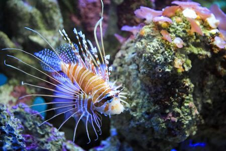 Exotic fish and coral in the sea. Nice fish in the reefs of the oceans.
