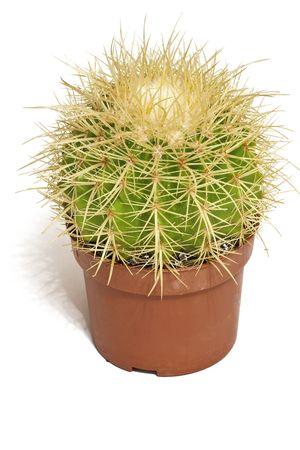 A Solar cactus in a pot photo