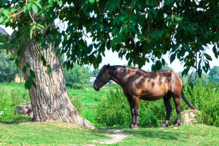 Old tired horse near the tree photo