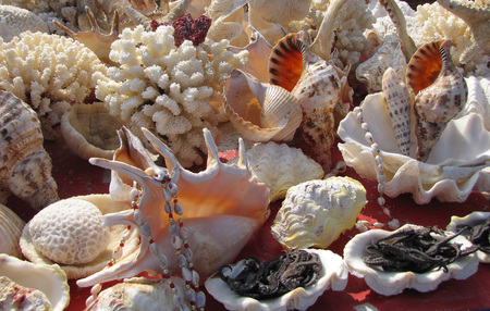 array: An array of exotic seashells and coral. Stock Photo