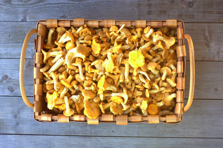 Chanterelle mushrooms in a square basket on wooden background.