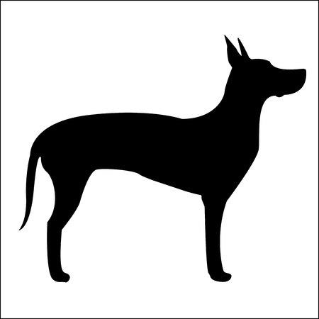 Dog Silhouette Great Dane Isolated on White