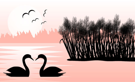 Two Swans in a Lake with Reeds in Sunrise Flat Landscape