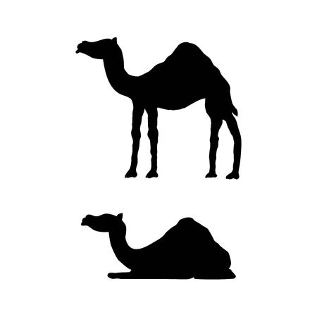 Lying and Standing Camel Silhouette Isolated on White