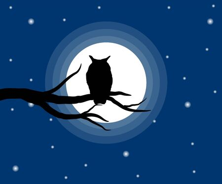 Owl Silhouette on a Barren Tree at Night
