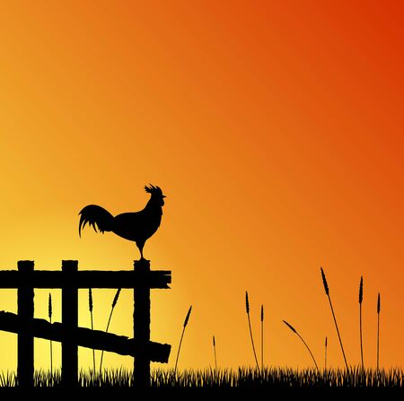 Rooster on the Fence at Sunset in the Countryside Çizim