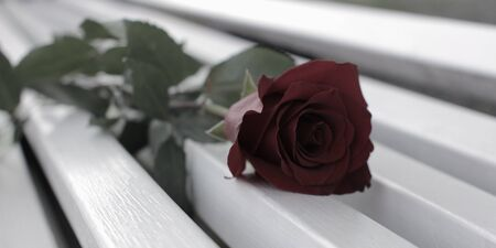 Red Rose on the bench dimmed colors. Romantic atmosphere for a wedding or dating.