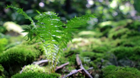 Fern Sprout in the Sunny Forest Stok Fotoğraf