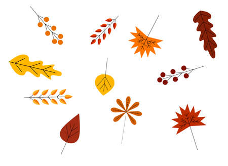 Colorful Autumn Leaves and Berries Collection Flat Style 向量圖像