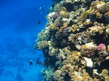 marsa: Coral reef in Red sea, Marsa Alam Stock Photo