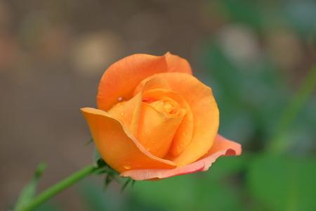 in bloom: Summer flower bloom Stock Photo