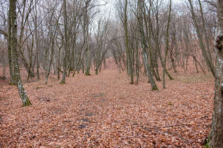 Hoia Baciu Forest. The World Most Haunted Forest with a reputation for many intense paranormal activity. Stockfoto