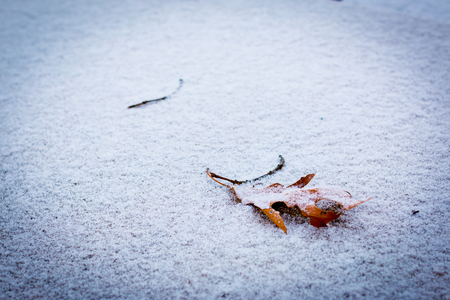 Leaf in the snow 写真素材