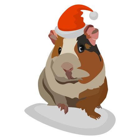 Guinée porcs de Noël