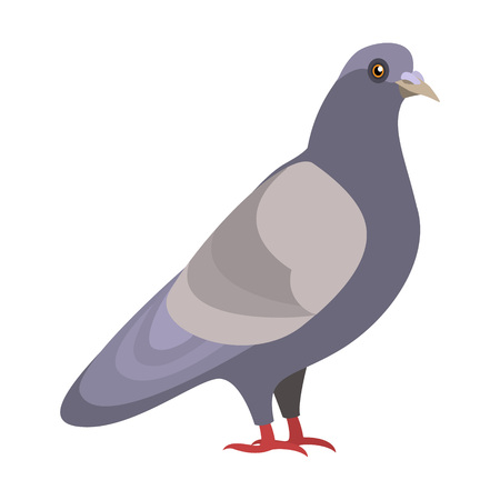Beautiful realistic  single illustration of a Dove, isolated vector on white background Illustration