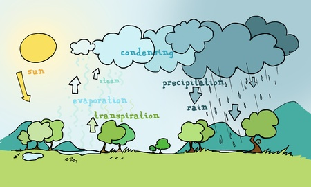 transpiration: Water cycle explicative plan. Ink and digital colors
