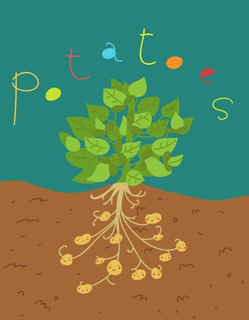 funny potatoes plant Stock Photo - 13023081