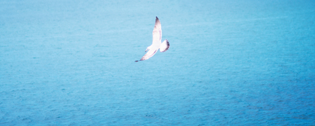 Photo of gull in sky with clouds and bright sun Banque d'images