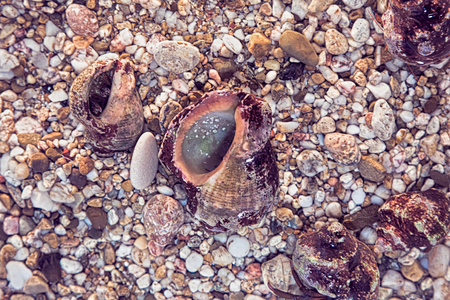 Background of the beautiful exotic shell and stones ad clams Banque d'images