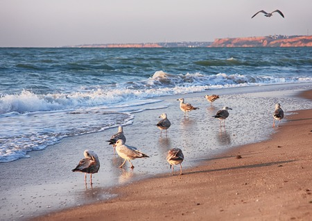 Seascape with seagulls flying at danish beach. Seagulls flying o the beach Banque d'images