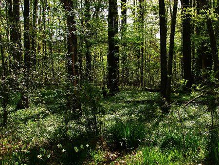 shady: shady woods Stock Photo