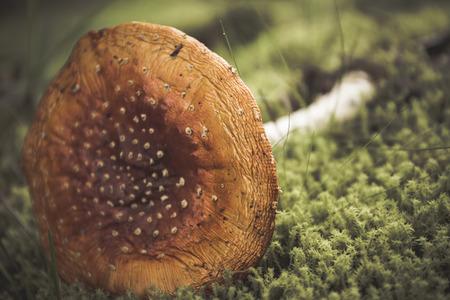 macrophotography: Reishi fungus II