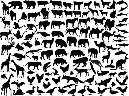 big collection of different animals - vector Vector
