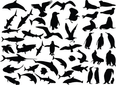 sea animal collection - vector Stock Vector - 5030363