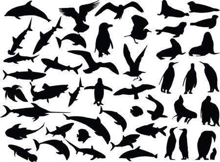 sea gull: sea animal collection - vector