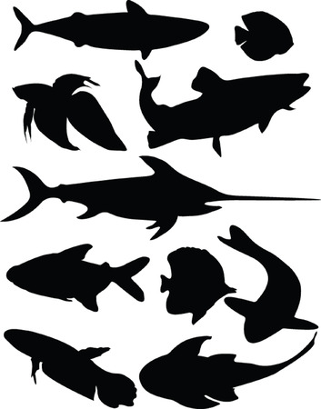fish collection - vector Stock Vector - 5052929