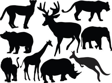 wild animals collection - vector Vector