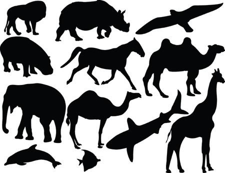 animals collection - vector Vector