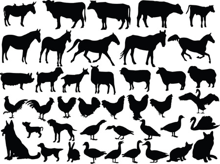 farm animal collection - vector Stock Vector - 5090878