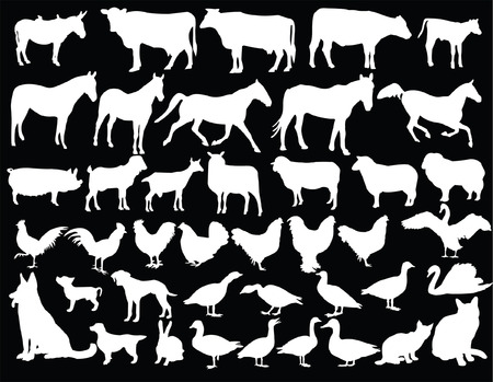 farm animal collection with background - vector Illustration