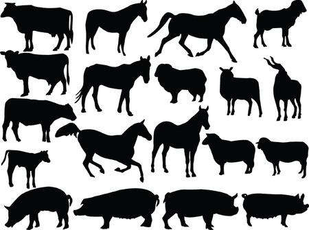 calves:  farm animal 2 - vector