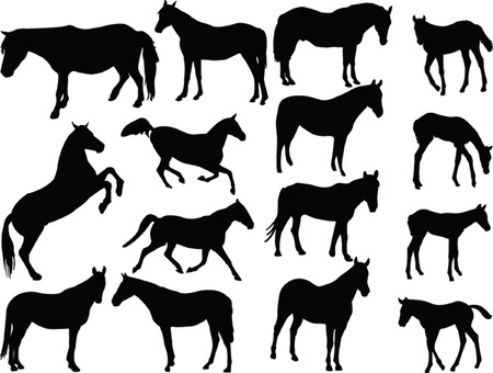 horses collection 2 - vector Vector
