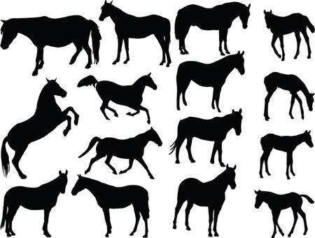 horses collection 2 - vector Vector