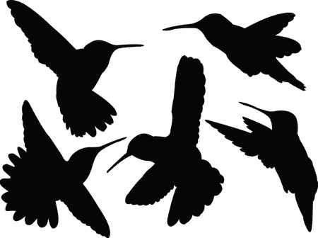 humming bird collection silhouette - vector