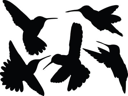 tarareando la colección de aves de silueta - vectoriales  Ilustración de vector