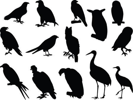 condor: kites silhouette collection - vector Illustration