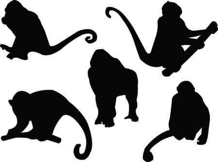 simian:  monkey silhouette - vector