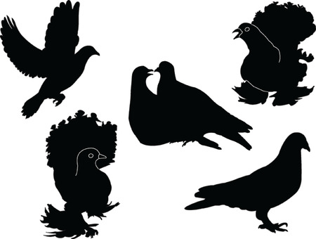 pigeons collection - vector Stock Vector - 5120440