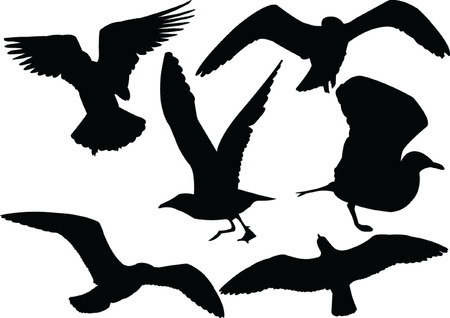 wingspan:  seagull collection silhouette - vector