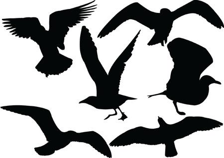 seagull collection silhouette - vector Vector