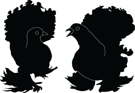 couple lit: two pigeon - vector Illustration