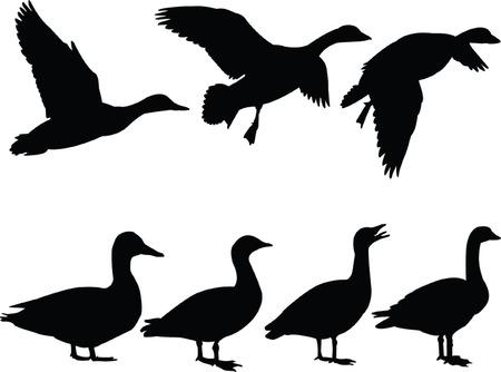 pato: pato salvaje silueta colecci�n - vector