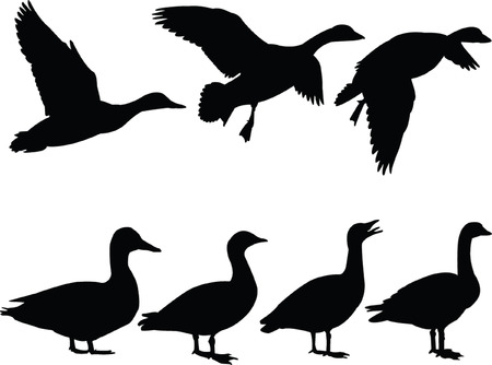 duck: wild duck silhouette collection - vector